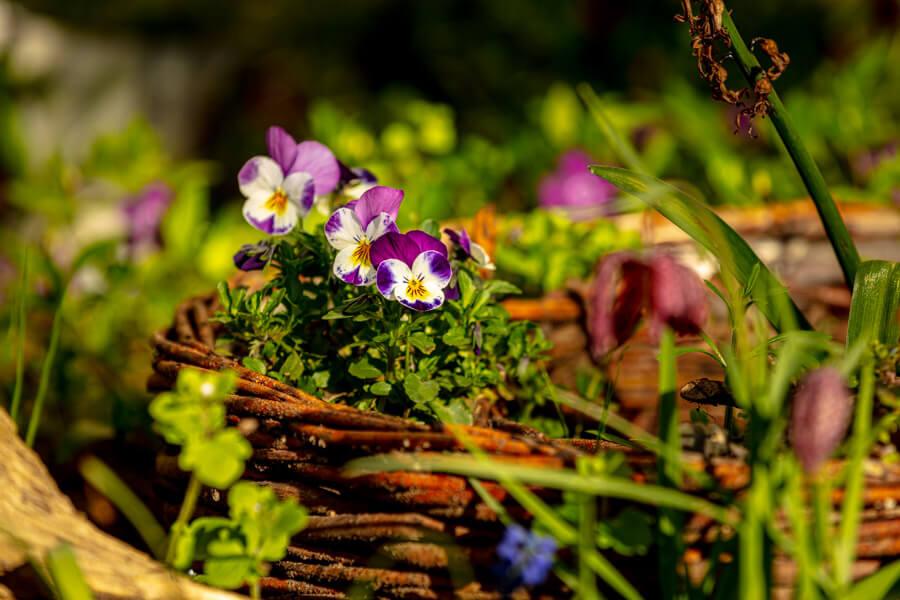 Die Garten-AG bepflanzt und pflegt die Grünanlagen